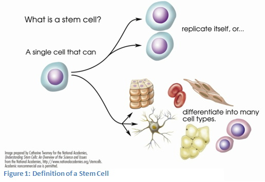 scientific paper on stem cell research Free sample research paper on stem cell research, example essay on embryonic stem cells online research proposal on stem cells.